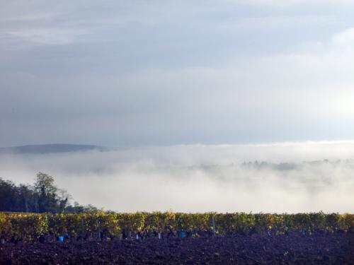 mist in dal02